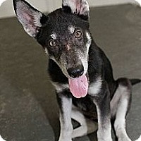 Adopt A Pet :: McGee - Bartow, FL
