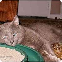 Adopt A Pet :: Frankie - Cincinnati, OH