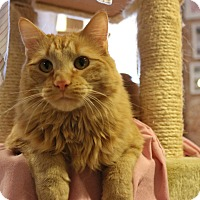 Adopt A Pet :: Comiki - St. Louis, MO