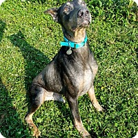 Adopt A Pet :: Brody - New Richmond, OH