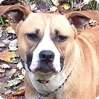 Adopt A Pet :: Bianca-Happy Girl - Plainfield, CT
