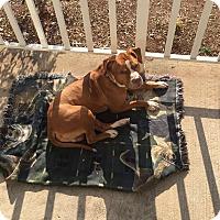 Adopt A Pet :: Harley - Bridgewater, NJ