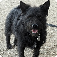 Adopt A Pet :: Daffodil - Scottsdale, AZ