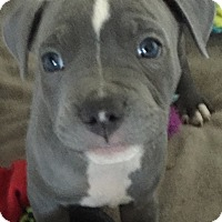 Adopt A Pet :: Angel - Woodland, CA