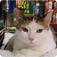 Adopt A Pet :: Princess - Port Republic, MD