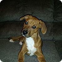 Adopt A Pet :: Queenie - eastlake, OH