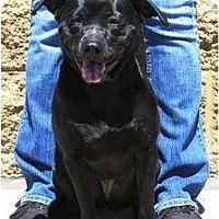 Adopt A Pet :: Mooshi - Gilbert, AZ