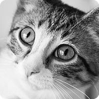 Adopt A Pet :: Deke - Chicago, IL