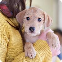 Adopt A Pet :: Skippy Jon - Marietta, GA