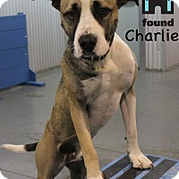 Adopt A Pet :: Charlie - Chicago, IL