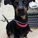 Adopt A Pet :: Nucky