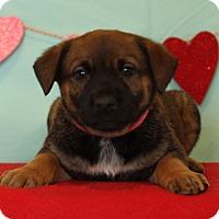 Adopt A Pet :: Cinnamon - Waldorf, MD