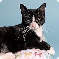 Adopt A Pet :: Casey - Wilmington, DE
