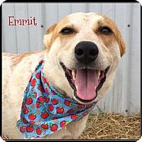 Adopt A Pet :: Emmit - Jasper, IN