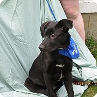 Adopt A Pet :: Danny - Glastonbury, CT