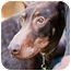Photo 2 - Doberman Pinscher Dog for adoption in Santee, California - Harry