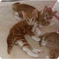 Adopt A Pet :: Cinnamon & Paprika - Arlington, VA
