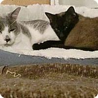 Adopt A Pet :: Harpo and Mr. Bigglesworth - San Luis Obispo, CA