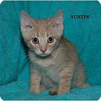 Adopt A Pet :: Austin - Catasauqua, PA