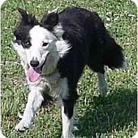 Adopt A Pet :: Lizzie - Tiffin, OH