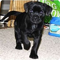 Adopt A Pet :: Shirley - Glastonbury, CT