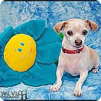 Adopt A Pet :: Sparky - Higley, AZ