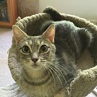 Adopt A Pet :: Khloe - Herndon, VA