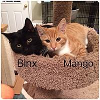 Adopt A Pet :: BINX - Hamilton, NJ