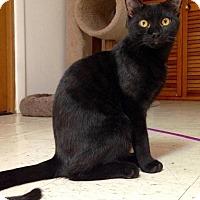 Adopt A Pet :: Obsidian - River Edge, NJ