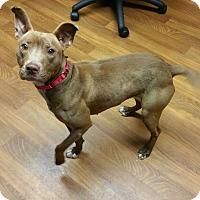 Adopt A Pet :: Cinnamon - Lisbon, OH