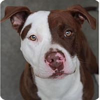 Adopt A Pet :: RUBY:Low ees/altered - Red Bluff, CA