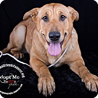 Adopt A Pet :: Blanca - Lodi, CA