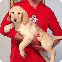 Adopt A Pet :: Hamlet - New Philadelphia, OH