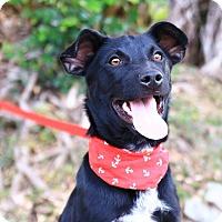Adopt A Pet :: Renna - San Mateo, CA