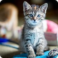 Adopt A Pet :: Mae - Garland, TX