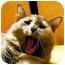 Photo 3 - Domestic Longhair Cat for adoption in Irvine, California - Chloe