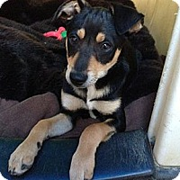 Adopt A Pet :: Jake - Inglewood, CA