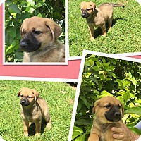 Adopt A Pet :: Magdalena - Scottsdale, AZ