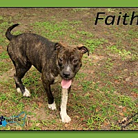 Adopt A Pet :: Faith - Sarasota, FL
