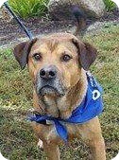 German Shepherd Dog Dog for adoption in Hampton, Virginia - BARNEY