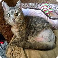 Adopt A Pet :: Mittsu - Edmond, OK