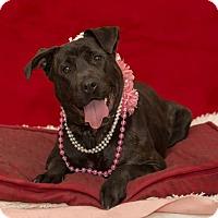 Adopt A Pet :: Blossom - Flint, MI
