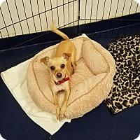 Adopt A Pet :: ABIGAL - Gustine, CA