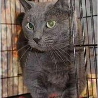 Adopt A Pet :: Boo-Dah - Clementon, NJ