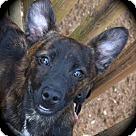 Adopt A Pet :: Lyon