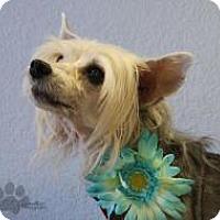 Adopt A Pet :: Lucille Bald - Yukon, OK