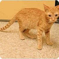 Adopt A Pet :: Reece - Orlando, FL