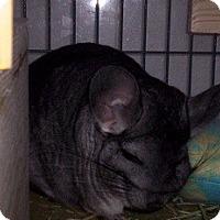 Adopt A Pet :: Chubbs - Avondale, LA