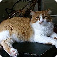 Adopt A Pet :: Puddin' - Little Rock, AR