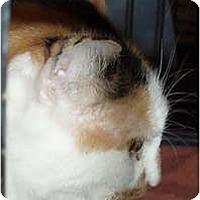 Adopt A Pet :: Sushi - Westfield, MA
